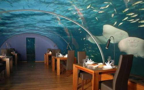 The under-sea restaurant is inside the Hilton Maldives Resort & Spa. It is five metres below the waves of the Indian Ocean , surrounded by a vibrant coral reef and encased in clear acrylic offering diners 270-degrees of panoramic underwater views.